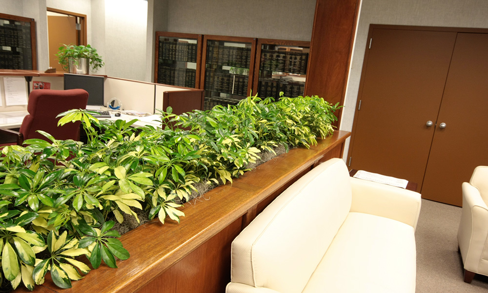 Get Indoor Plants on Rent for Better Ambience Inside the Office