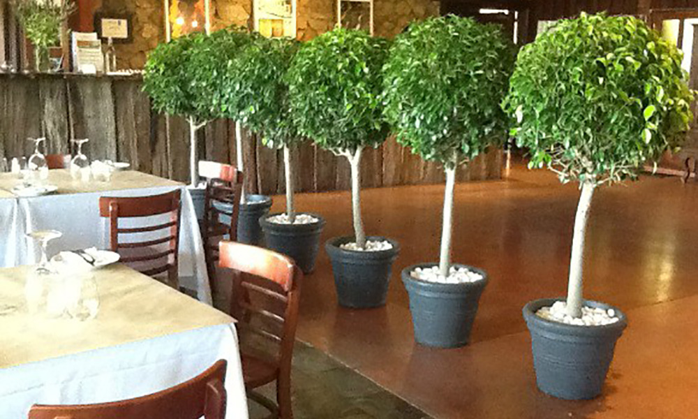 Beautiful Indoor Plants for Hire in Victoria
