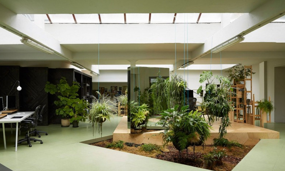 Give your Indoors a New Attractive Look with Indoor Plants