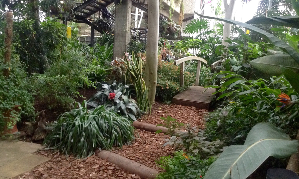 Choose Plant Hire Melbourne to Beautify Your Location with Indoor Plants