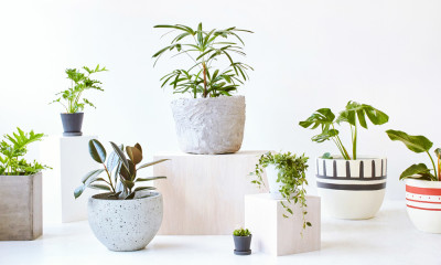 Indoor Plants in Melbourne