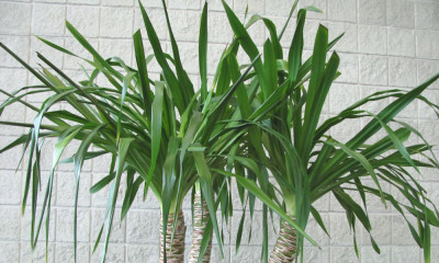 Benefits of Indoor Plants in Melbourne