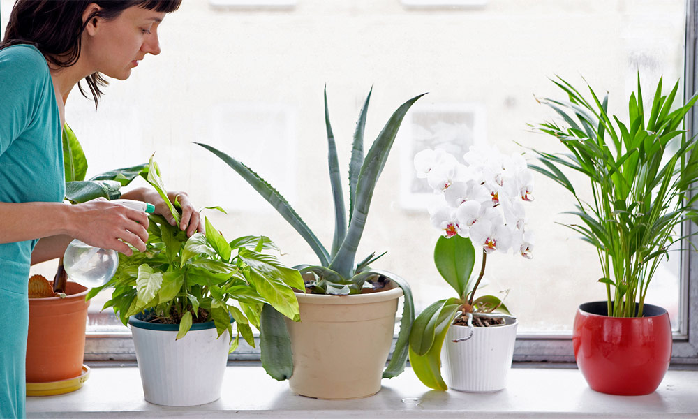 5 Tips of having a Green Decorating with Indoor Plants