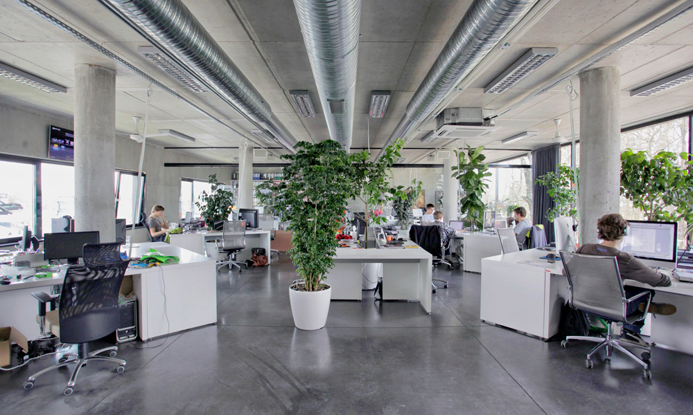 Office Plants Plays Major Role in Active Work Environment