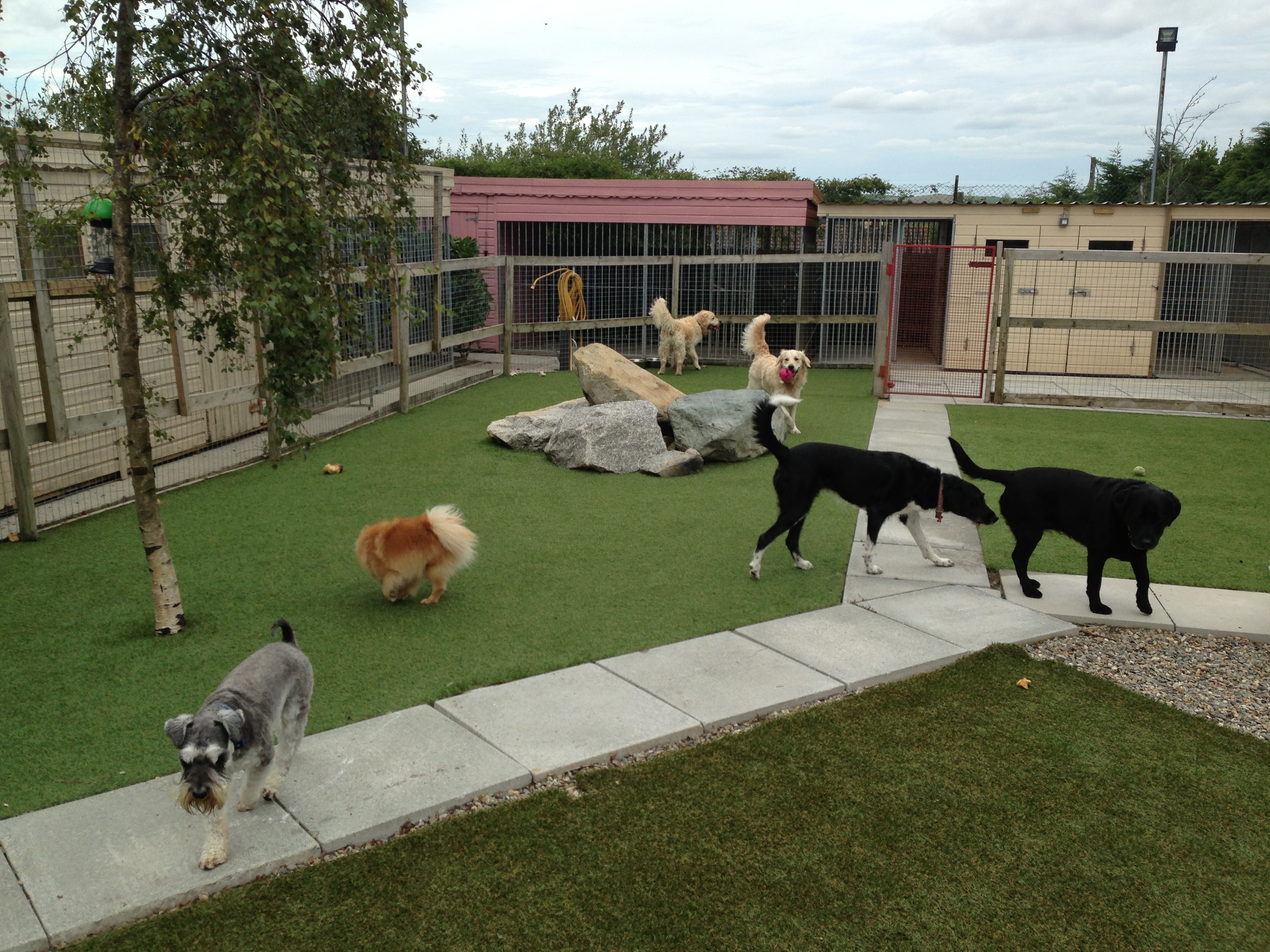 How to Select the Best Pet Boarding Facilities