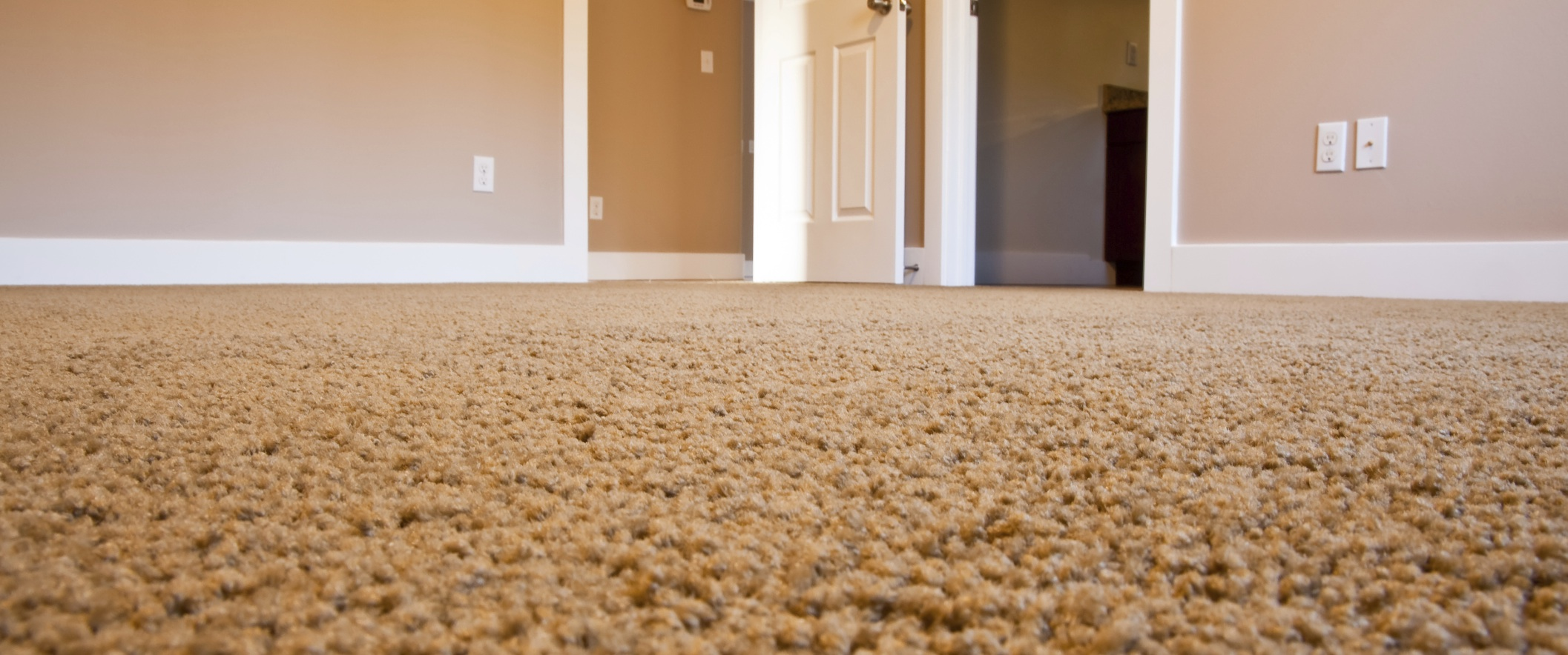 Find the Best Professional Carpet Cleaners