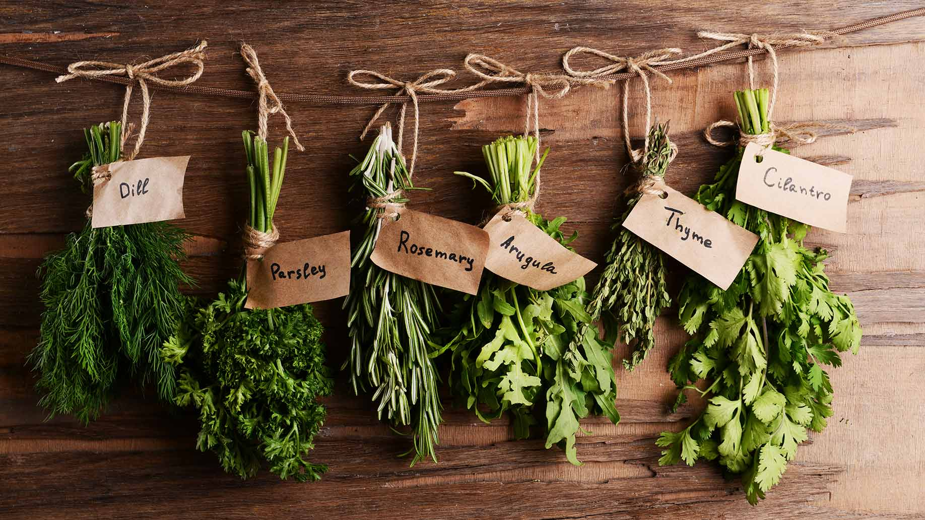 Powerful Plants: Medicinal Plants For Your Home or Garden