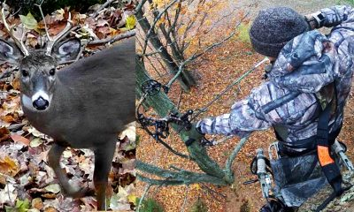 Bow Hunting For Whitetails