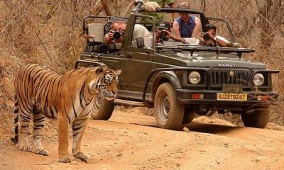 Luxury Safari of Ranthambore