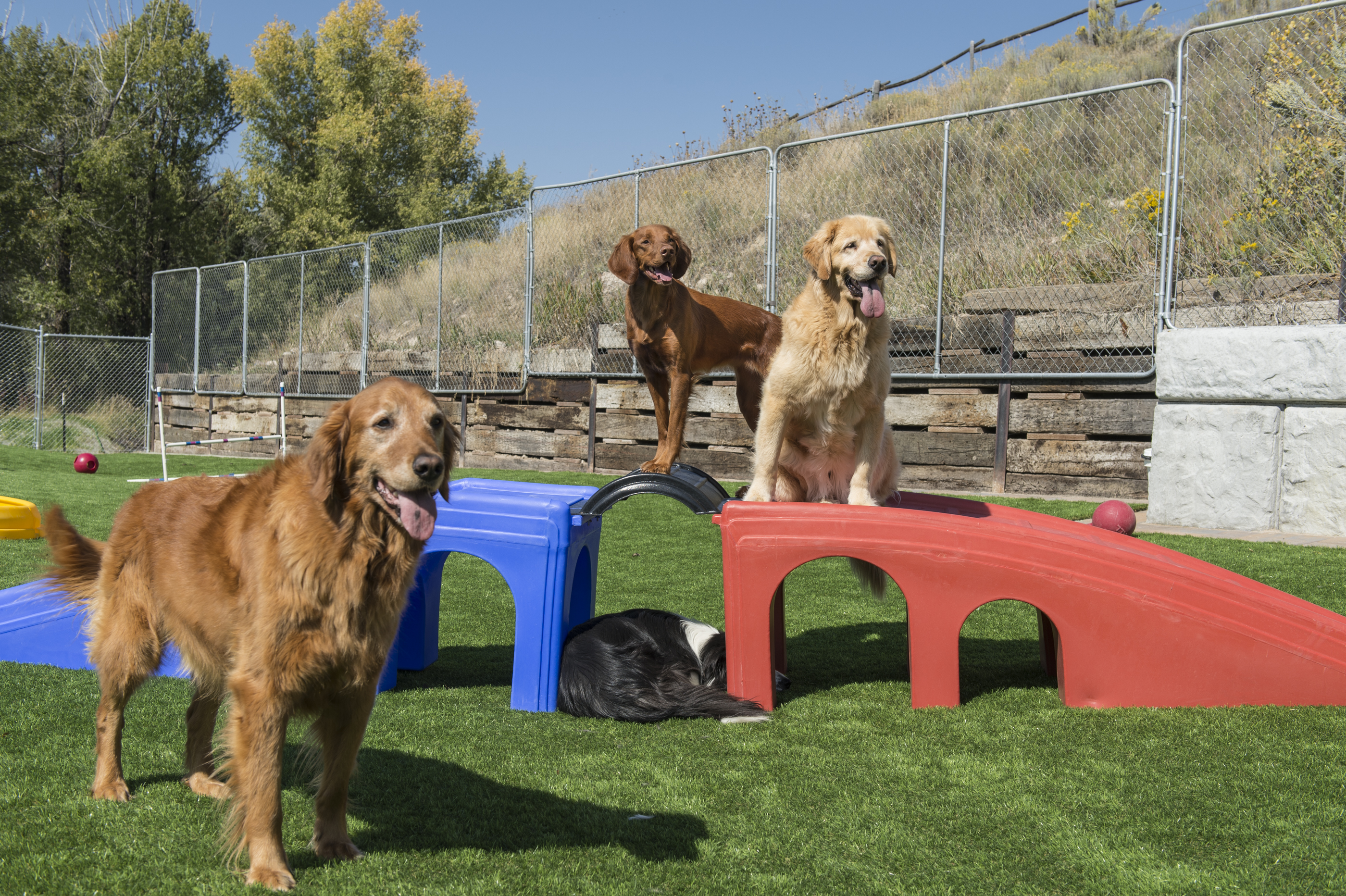 How Much Is Too Much Exercise For Your Puppy Or Dog?