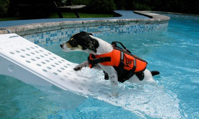Water-Safety-Dogs