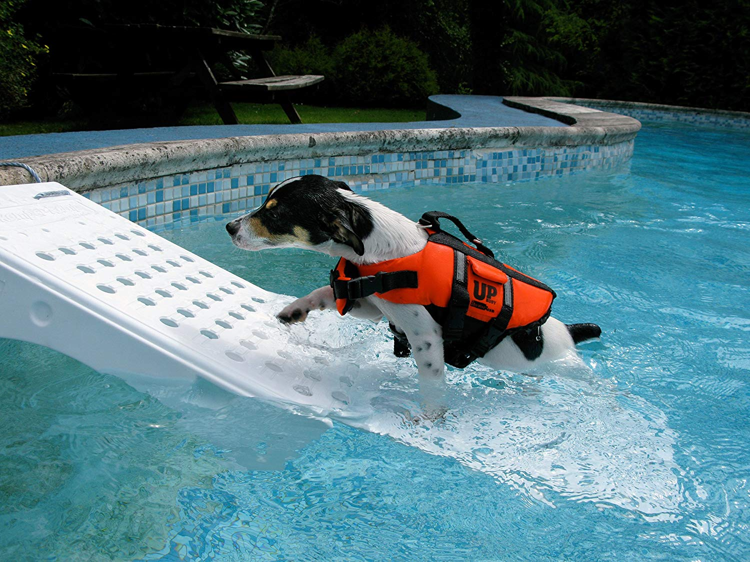 Water safety for Dogs: Tips and Tricks