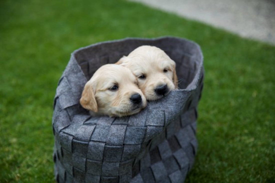 Is Your Family Ready for a New Puppy? 3 Ways to Know