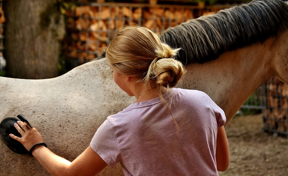 Tried and Tested Tips to Keep Your Racing Horse Healthy and Comfortable