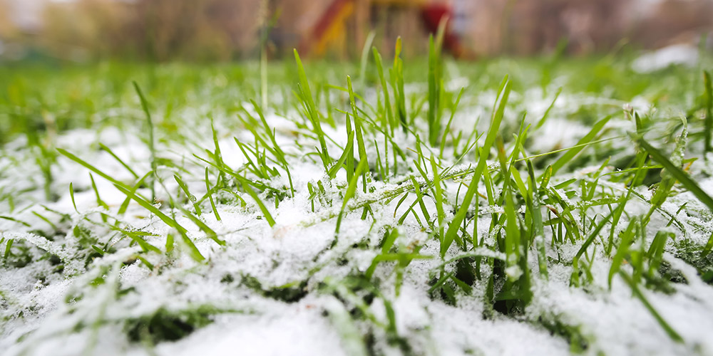 The 3 Most Important Tasks for Early Winter Lawn Care