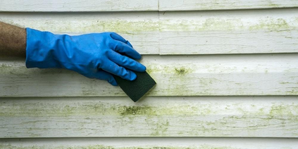 Mold Removal Reasons and Ways to Do It