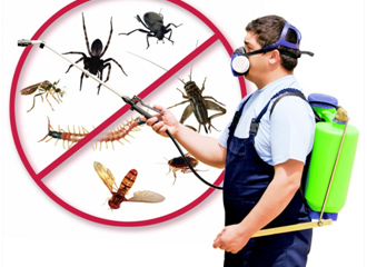 pest control treatment in Dubai