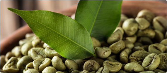 Green Coffee Beans – A Healthy Alternative for Weight Loss