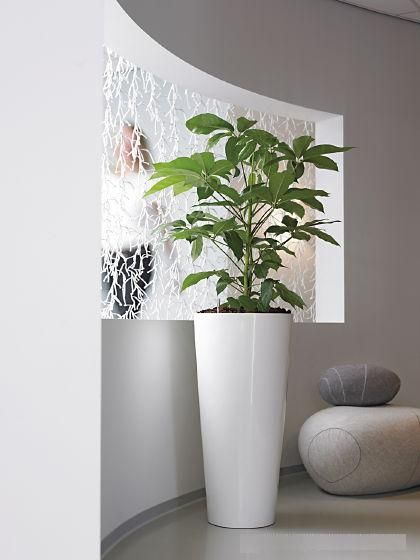 Office Plant Hire - Luwasa Indoor Plant Hire