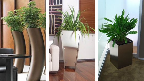 Office Plants for hire helps you grow you and your office