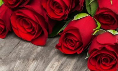 Beautiful Red Roses for Love