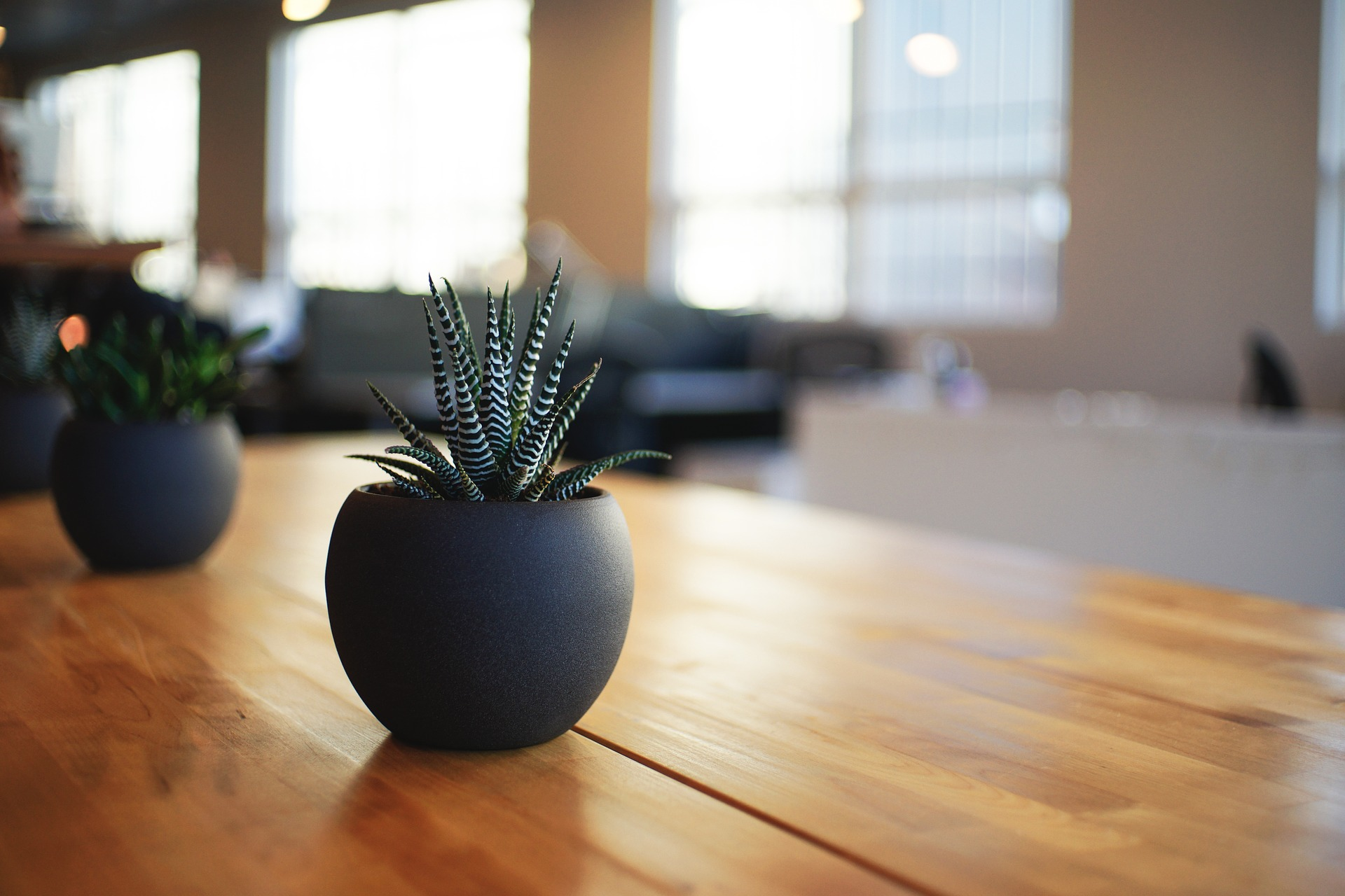 Trick Out Your Office Space with Plantscapes USA