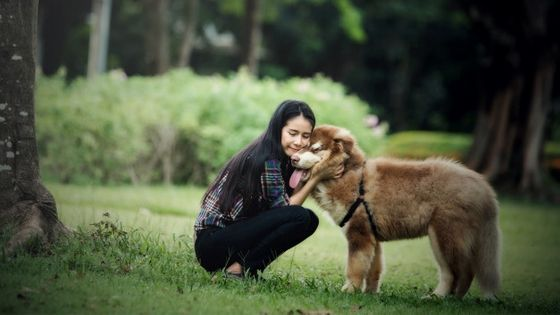 How Emotional Support Animals Helps Relieving Anxiety