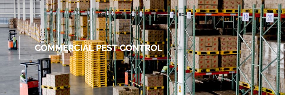 Useful Tips for Hiring Commercial Pest Control Services