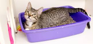 Preventing Litter Box Problems Before They Start
