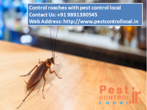 roaches control
