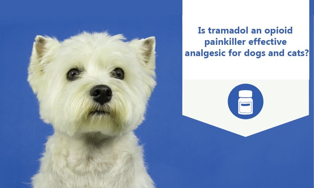 Is Tramadol An Opioid Painkiller Effective Analgesic For Dogs And Cats?