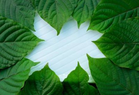 Kratom Herbal Plant And Its Benefits
