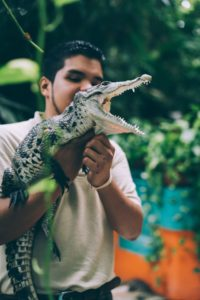 A man holding a baby alligator.