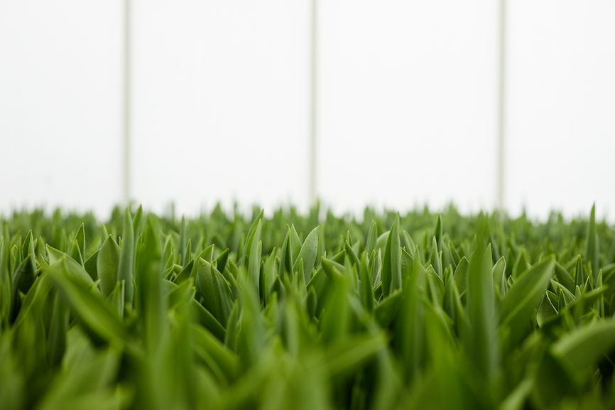 Pros and Cons of Artificial Grass for Indoor and Outdoor Use