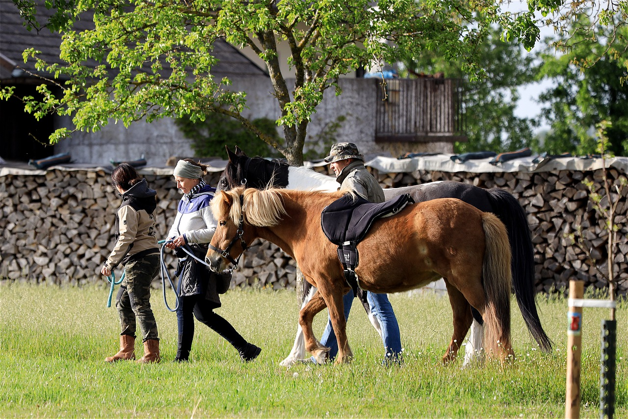 What To Do To Bring Back a Horse to a Full Recovery After a Break or Injury