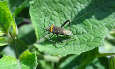 Tips to Naturally Get Rid Of Bugs on Plants