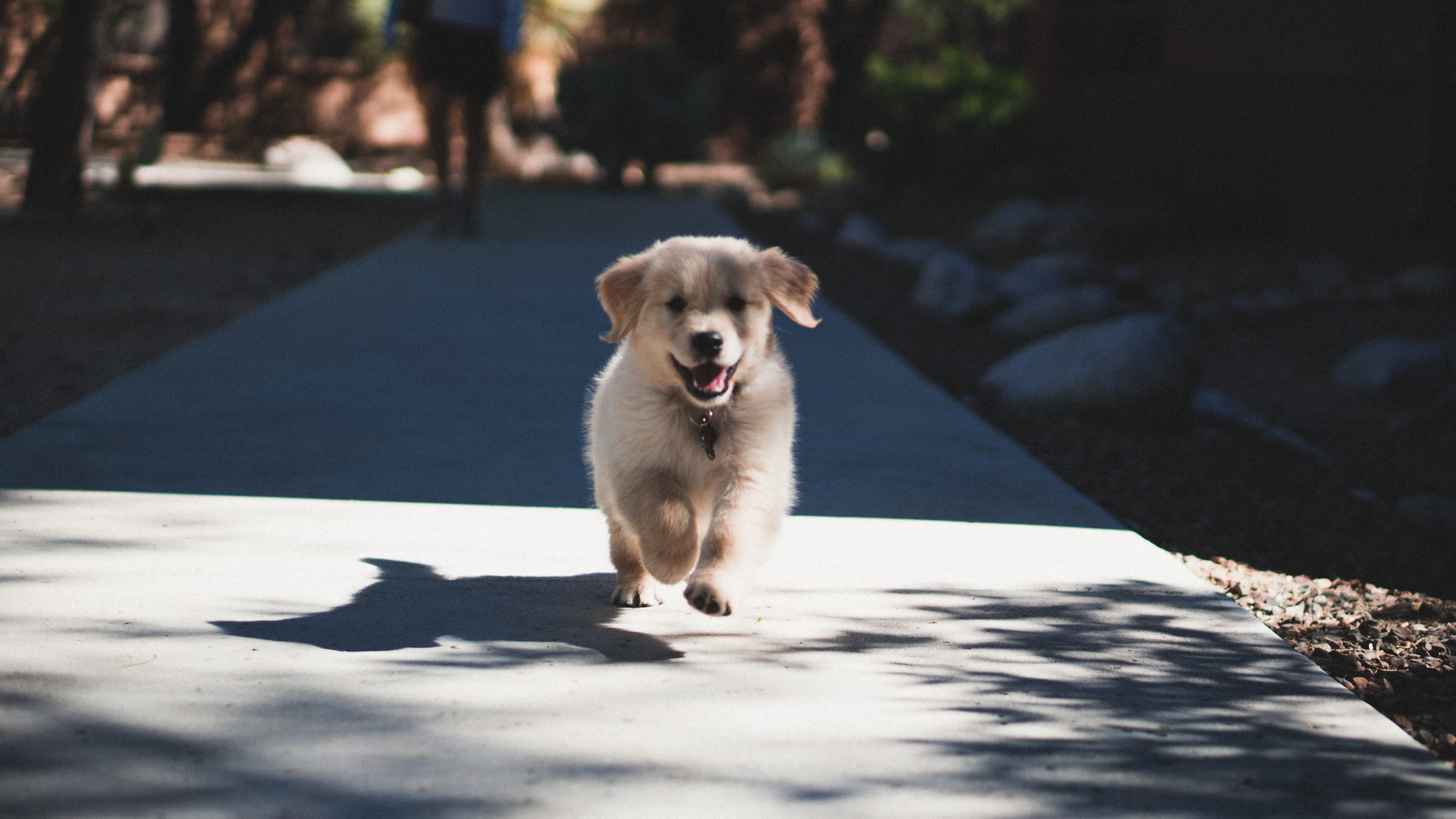 Everything You Need To Know About Puppy Training Classes