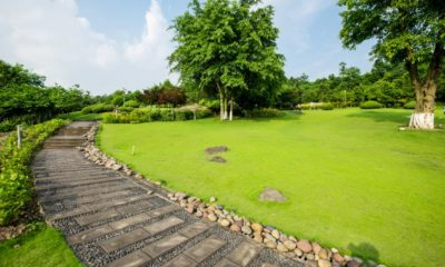 2grassland-landscape-greening-environment-park-background