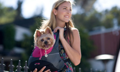 The Best Dog Sling for your Dog
