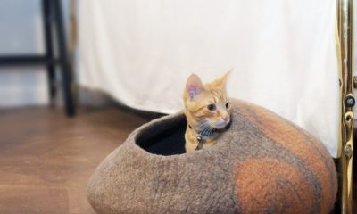 Best Accessories for Cats