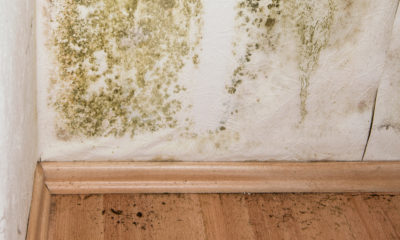 Mold Infestations in your House