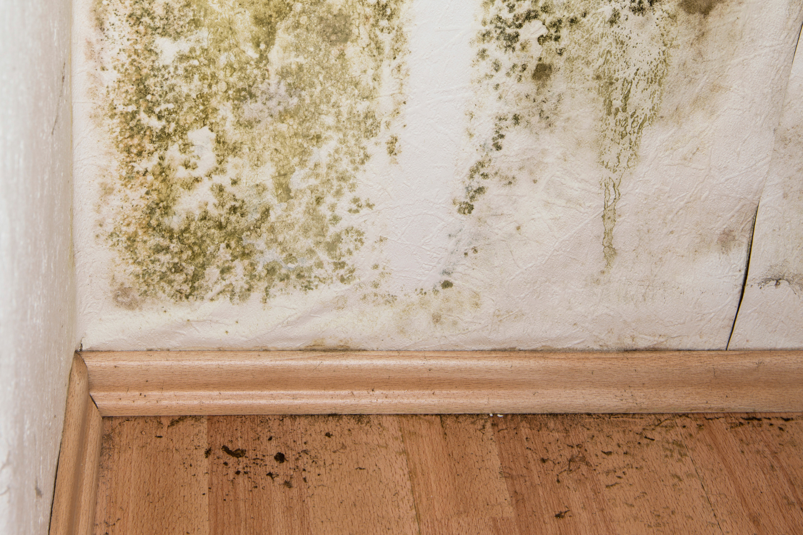 Determining Mold Infestations in your House