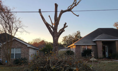 Tree Trimming And Tree Pruning and Their Benefits