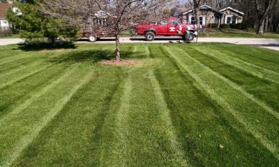 Why Opt For Organic Lawn Care