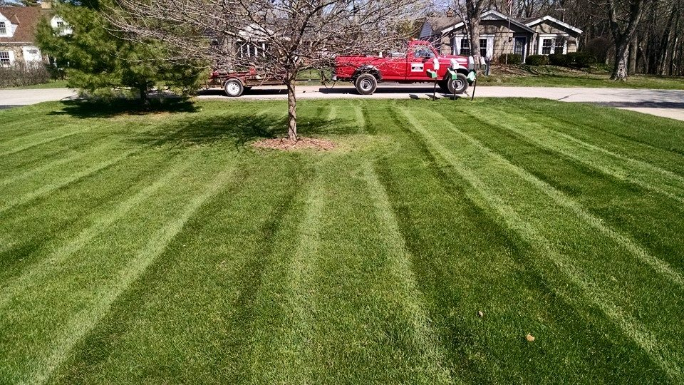 Why Opt For Organic Lawn Care?