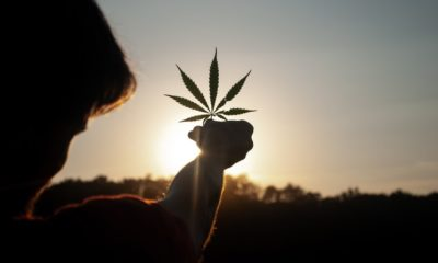 Is it Safe to Smoke Cannabis During The COVID-19 Pandemic