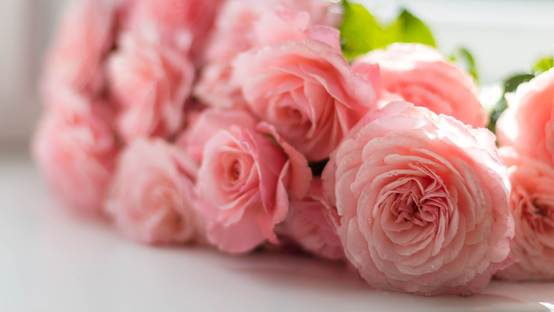 Customer's Choice: 7 All-time Favourite Flowers to Participate In Every Celebration!