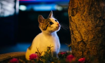 Nighttime Habits of Cats